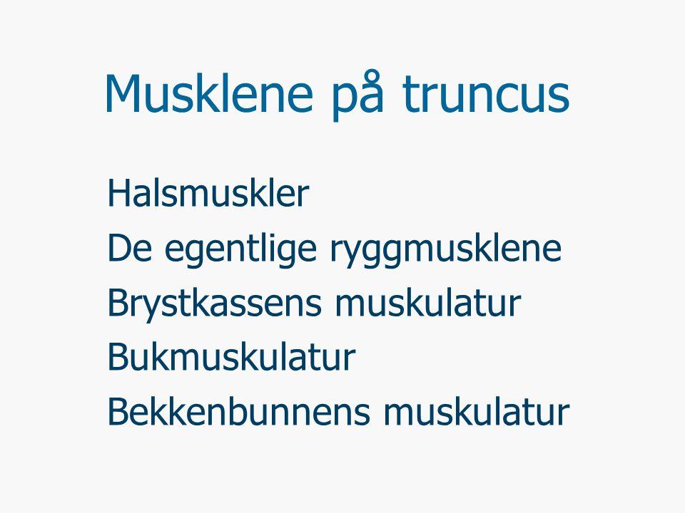 Musklene på truncus Halsmuskler De egentlige ryggmusklene