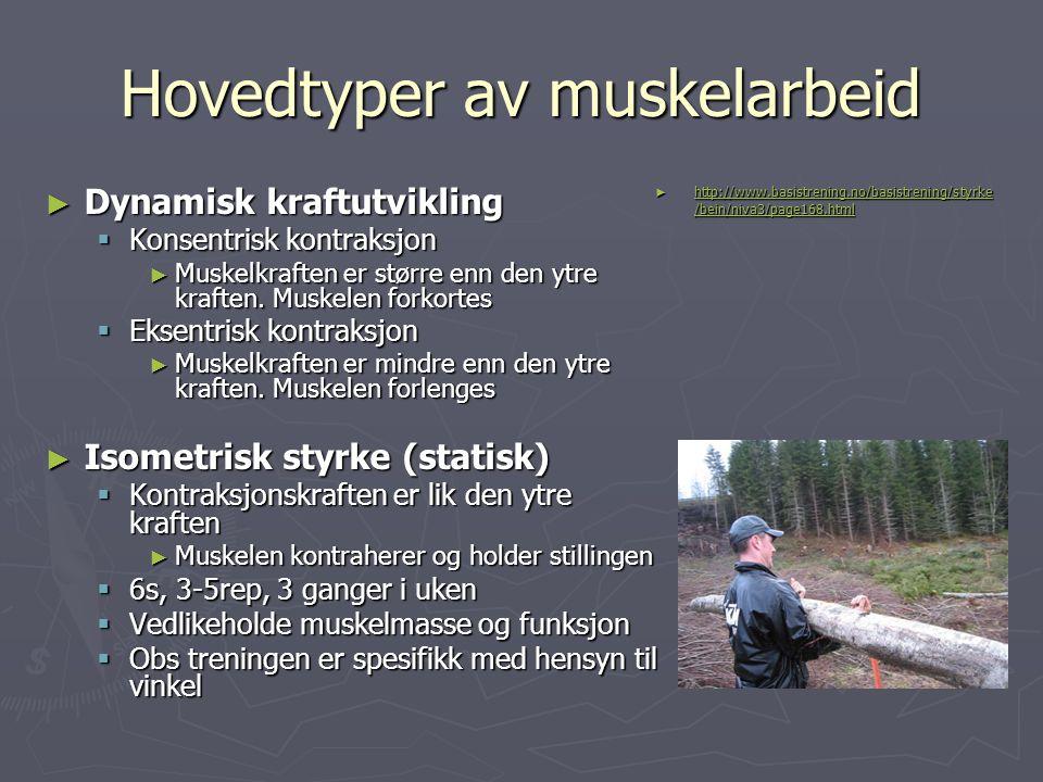 Hovedtyper av muskelarbeid