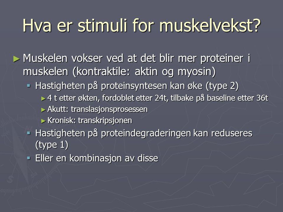 Hva er stimuli for muskelvekst