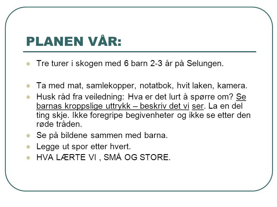 PLANEN VÅR: Tre turer i skogen med 6 barn 2-3 år på Selungen.