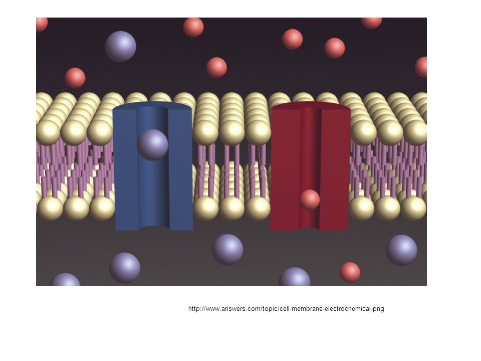 http://www.answers.com/topic/cell-membrane-electrochemical-png