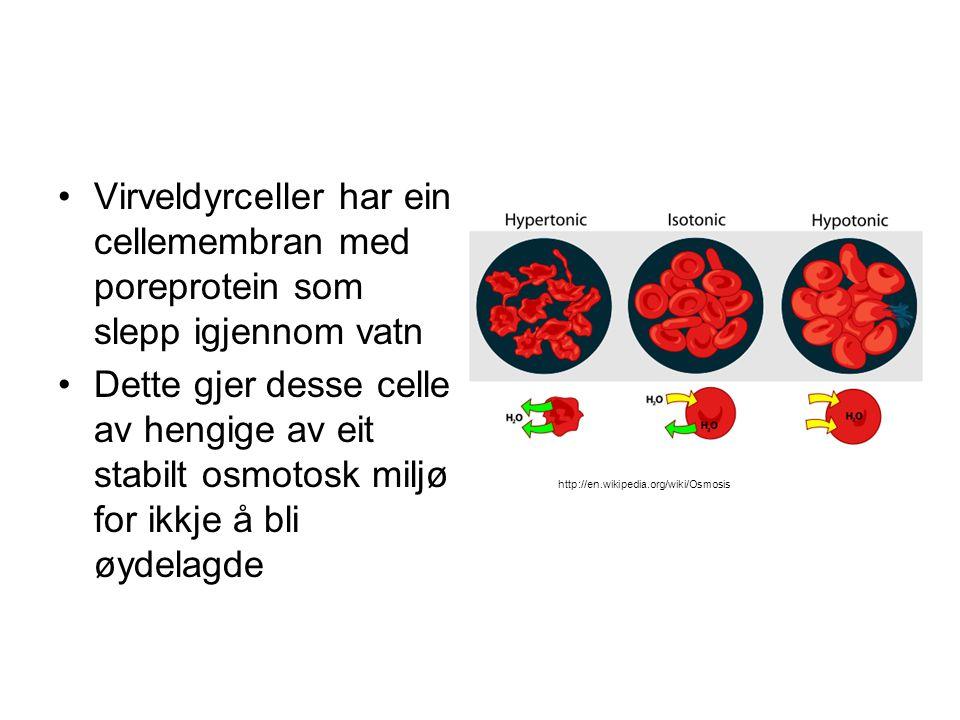 Virveldyrceller har ein cellemembran med poreprotein som slepp igjennom vatn