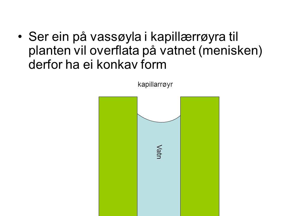 Ser ein på vassøyla i kapillærrøyra til planten vil overflata på vatnet (menisken) derfor ha ei konkav form