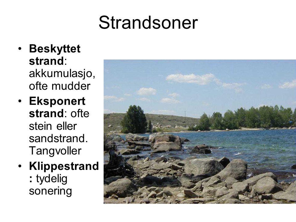 Strandsoner Beskyttet strand: akkumulasjo, ofte mudder