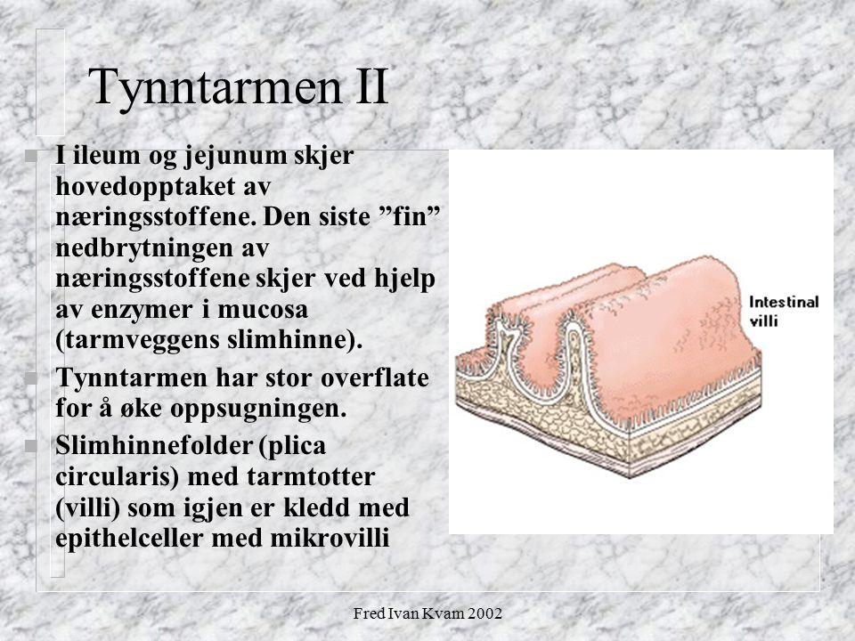 Tynntarmen II
