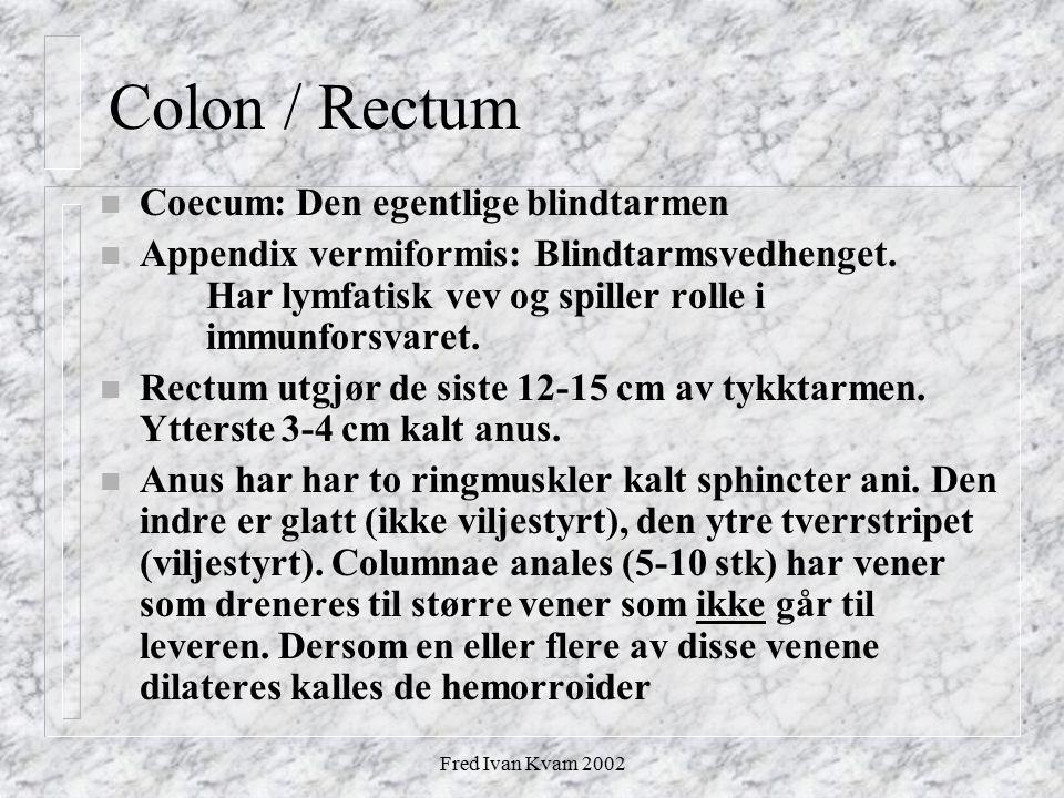 Colon / Rectum Coecum: Den egentlige blindtarmen