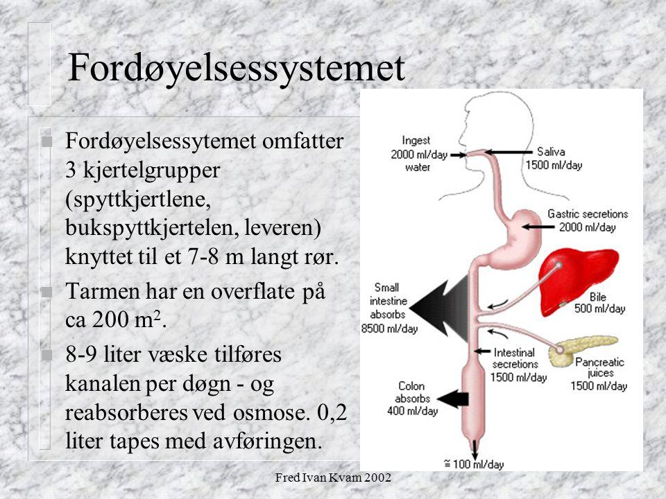 Fordøyelsessystemet Fordøyelsessytemet omfatter 3 kjertelgrupper (spyttkjertlene, bukspyttkjertelen, leveren) knyttet til et 7-8 m langt rør.