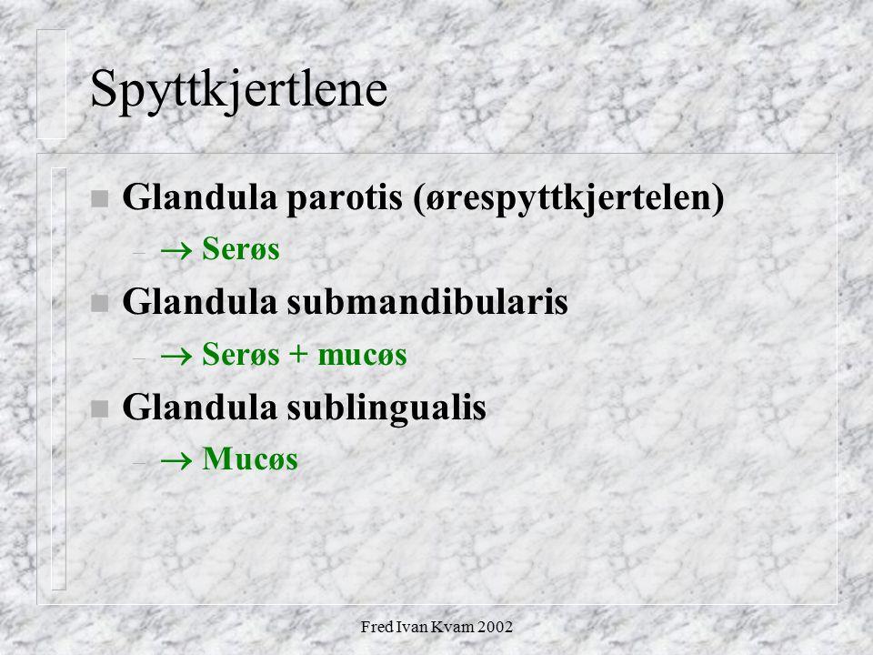 Spyttkjertlene Glandula parotis (ørespyttkjertelen)