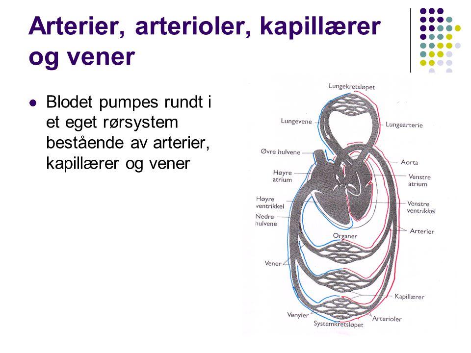 Arterier, arterioler, kapillærer og vener