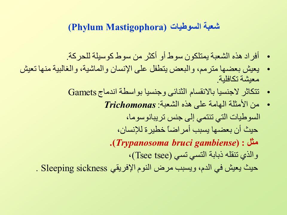 شعبة السوطيات (Phylum Mastigophora)