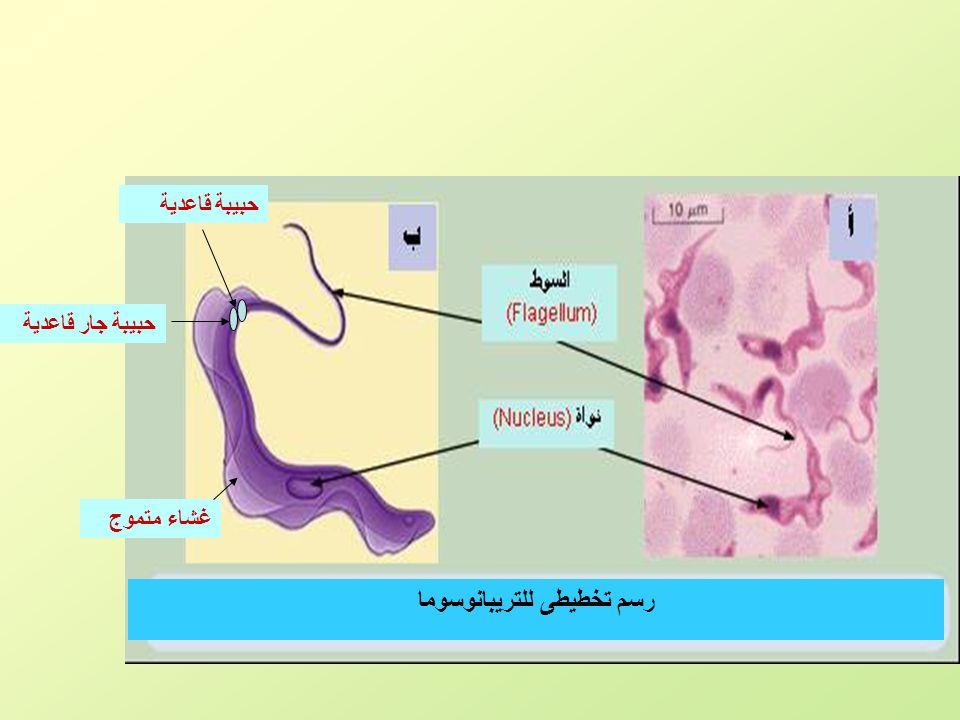 رسم تخطيطى للتريبانوسوما