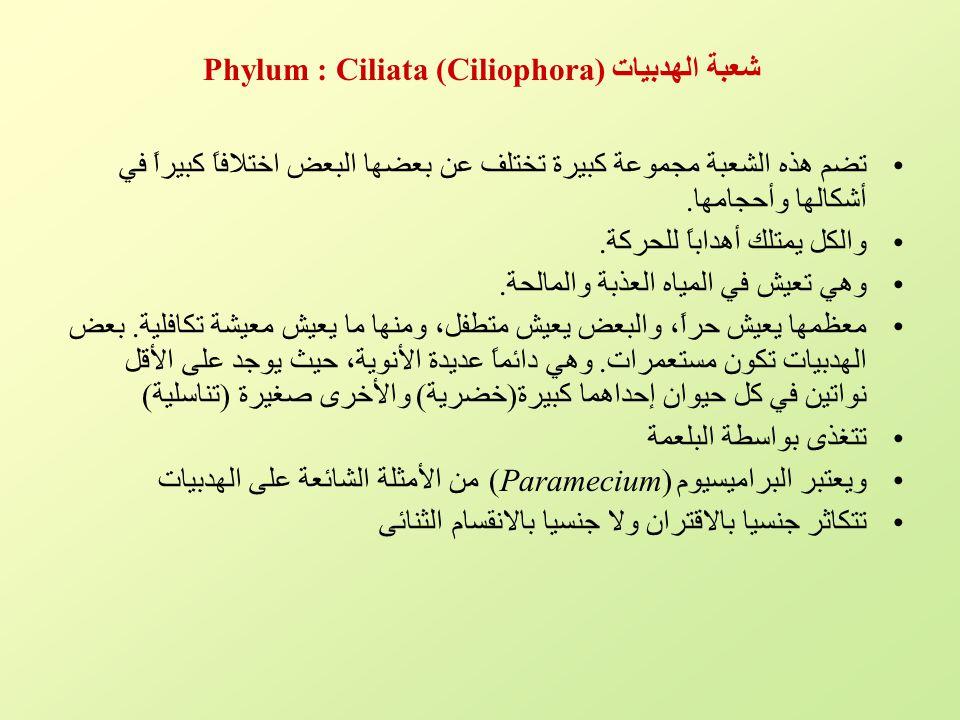شعبة الهدبيات Phylum : Ciliata (Ciliophora)