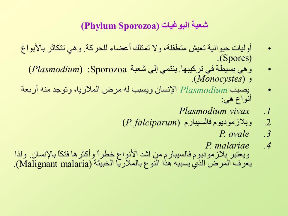 شعبة البوغيات (Phylum Sporozoa)