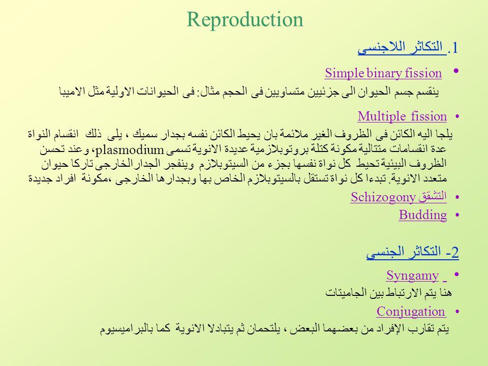 Reproduction Simple binary fission التكاثر اللاجنسى 2- التكاثر الجنسى