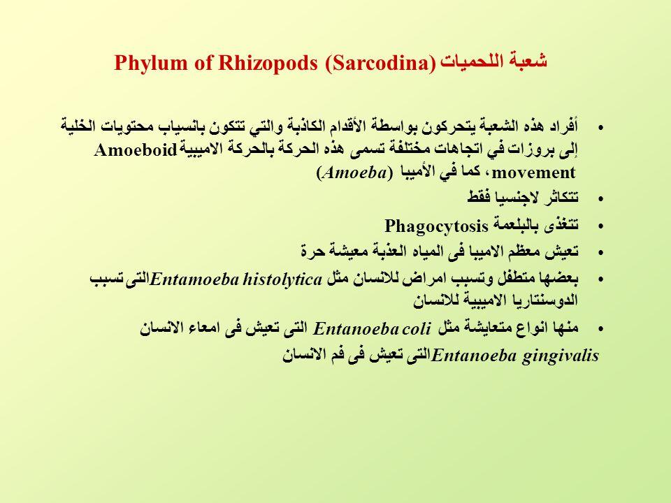 شعبة اللحميات Phylum of Rhizopods (Sarcodina)
