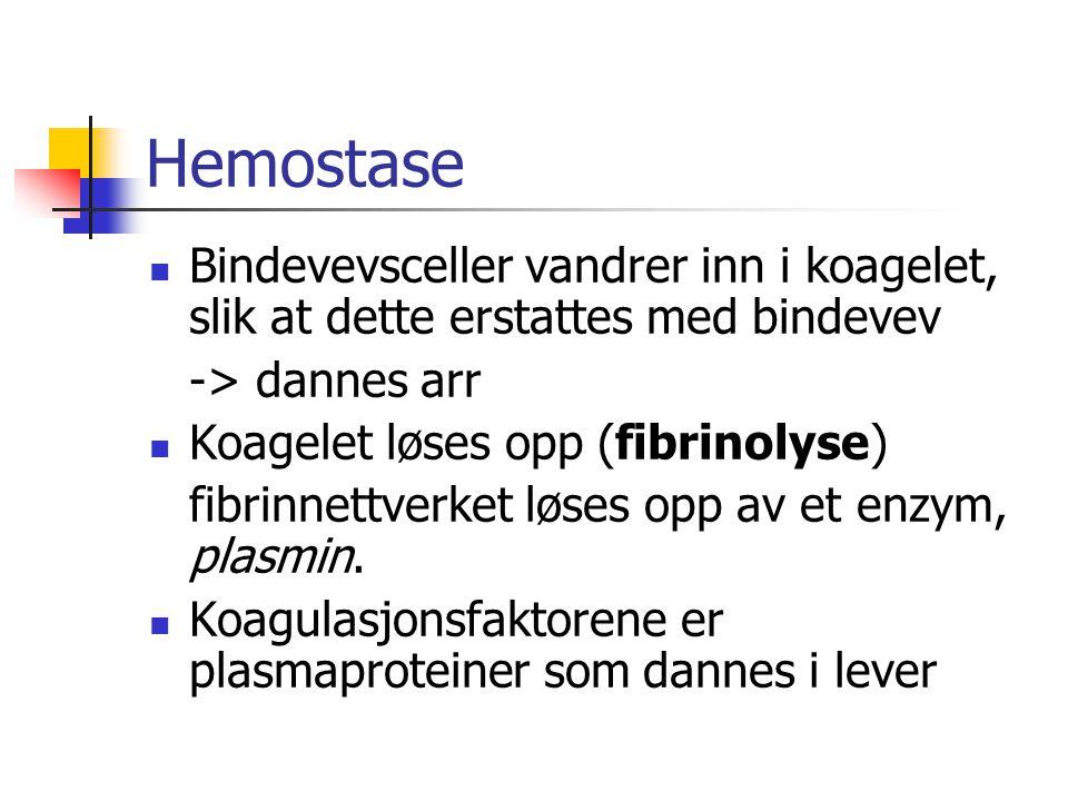 Hemostase Bindevevsceller vandrer inn i koagelet, slik at dette erstattes med bindevev. -> dannes arr.