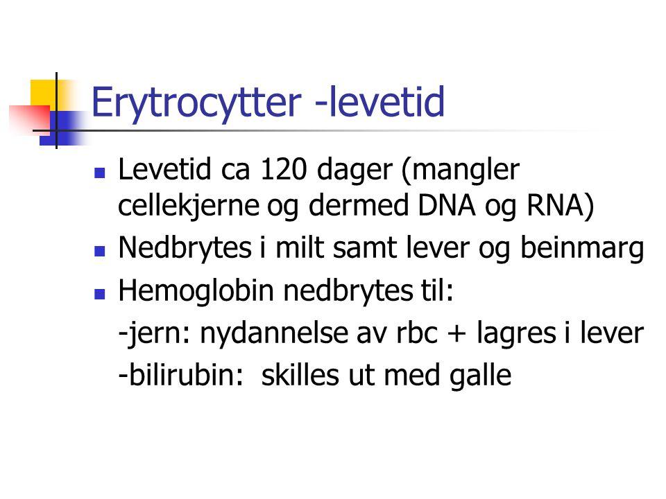 Erytrocytter -levetid