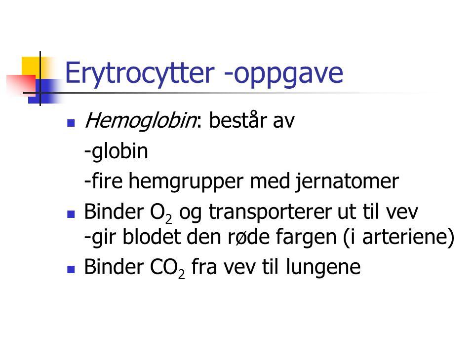 Erytrocytter -oppgave