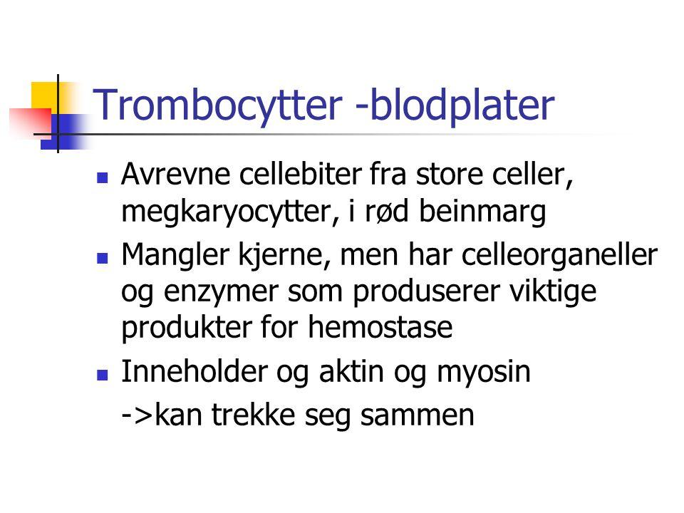 Trombocytter -blodplater