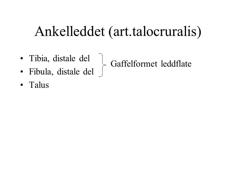 Ankelleddet (art.talocruralis)