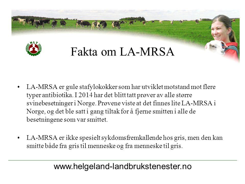 Fakta om LA-MRSA www.helgeland-landbrukstenester.no