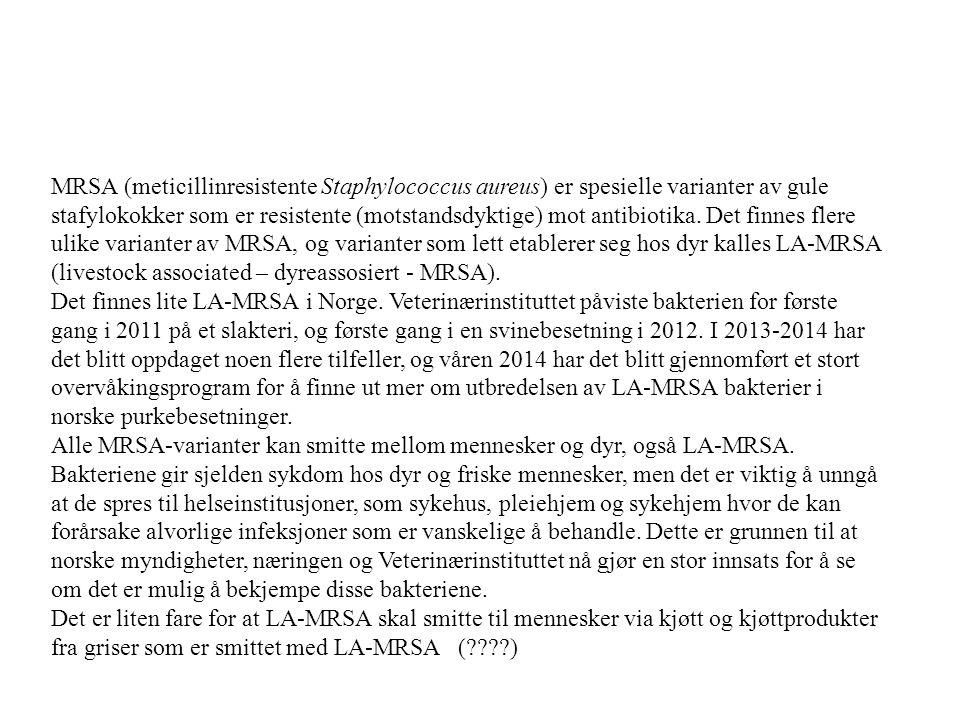 MRSA (meticillinresistente Staphylococcus aureus) er spesielle varianter av gule stafylokokker som er resistente (motstandsdyktige) mot antibiotika. Det finnes flere ulike varianter av MRSA, og varianter som lett etablerer seg hos dyr kalles LA-MRSA (livestock associated – dyreassosiert - MRSA).