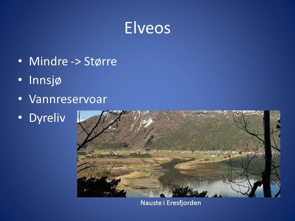 Elveos Mindre -> Større Innsjø Vannreservoar Dyreliv