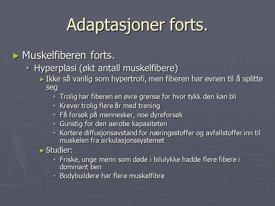 Adaptasjoner forts. Muskelfiberen forts.