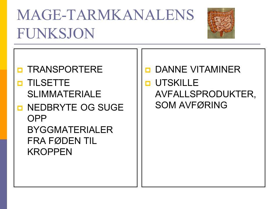 MAGE-TARMKANALENS FUNKSJON