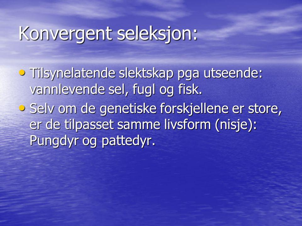 Konvergent seleksjon: