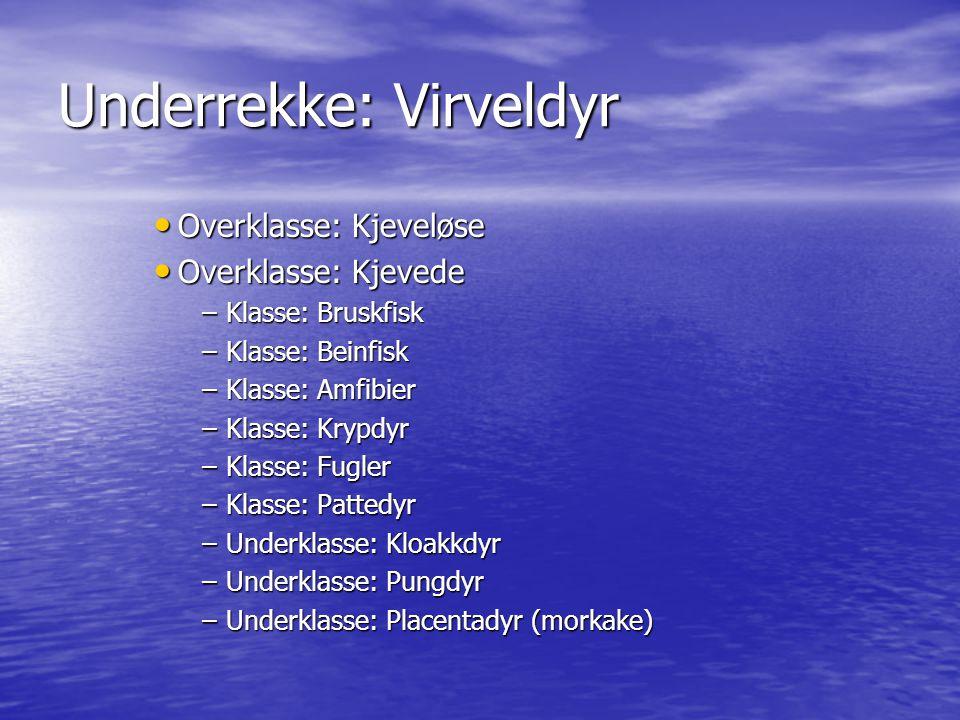 Underrekke: Virveldyr