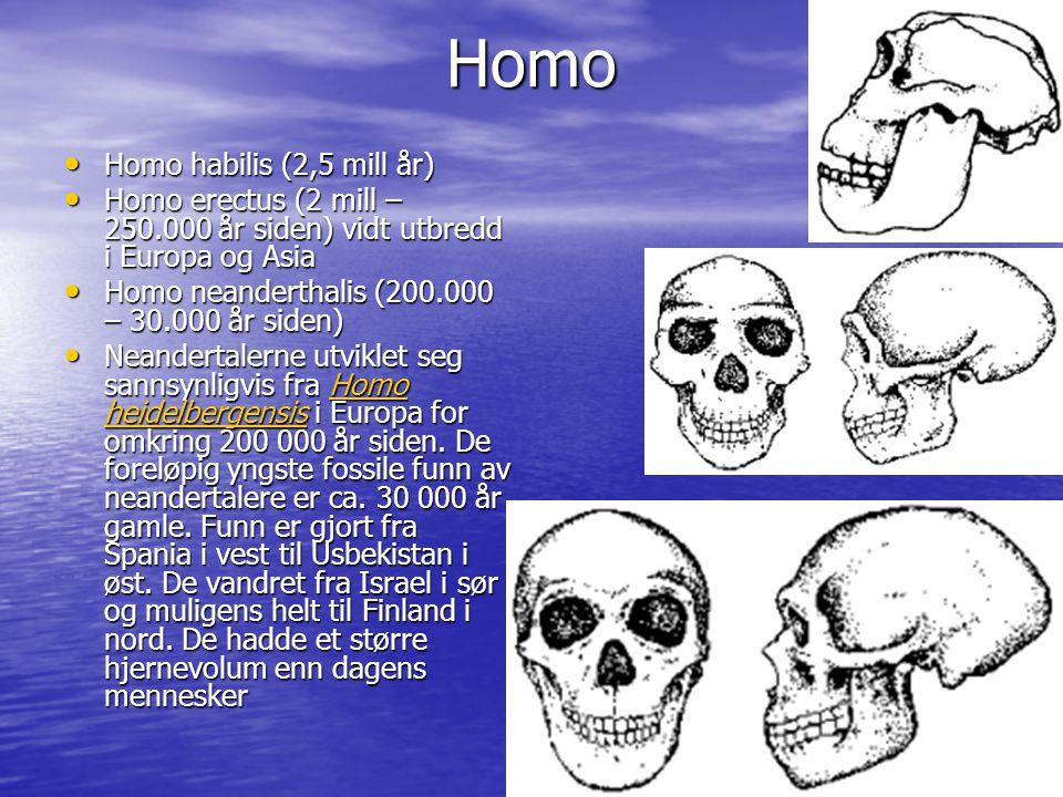 Homo Homo habilis (2,5 mill år)