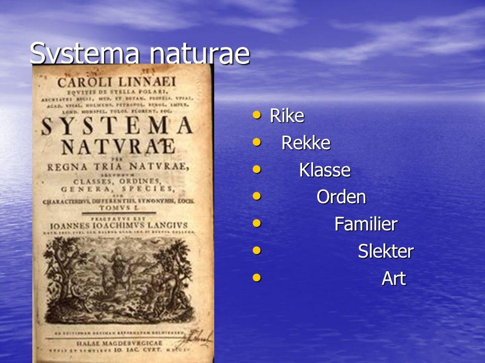 Systema naturae Rike Rekke Klasse Orden Familier Slekter Art