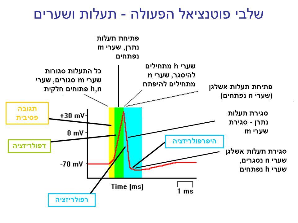 שלבי פוטנציאל הפעולה - תעלות ושערים