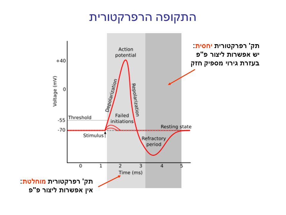 התקופה הרפרקטורית תק רפרקטורית יחסית: יש אפשרות ליצור פ פ בעזרת גירוי מספיק חזק.