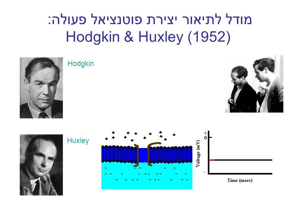 מודל לתיאור יצירת פוטנציאל פעולה: Hodgkin & Huxley (1952)