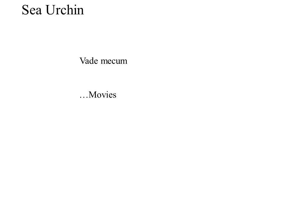 Sea Urchin Vade mecum …Movies