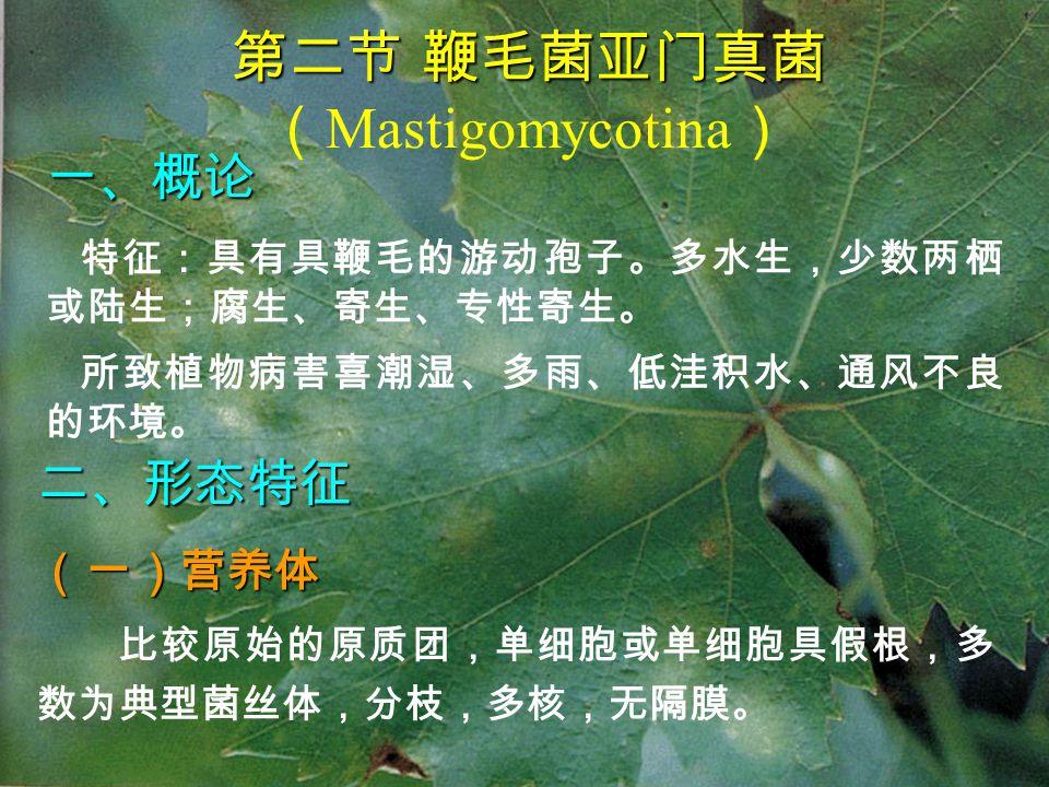 第二节 鞭毛菌亚门真菌(Mastigomycotina)
