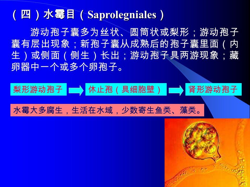 (四)水霉目(Saprolegniales)