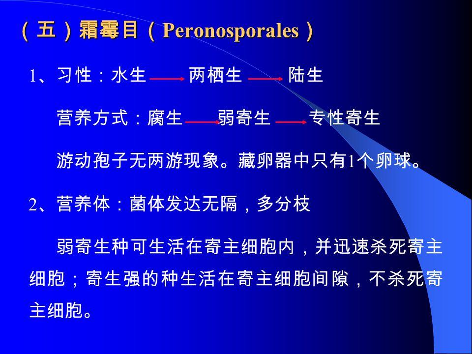 (五)霜霉目(Peronosporales)