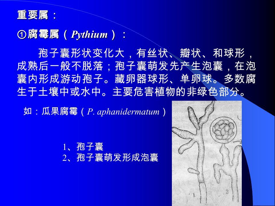 重要属: ①腐霉属(Pythium): 孢子囊形状变化大,有丝状、瓣状、和球形,成熟后一般不脱落;孢子囊萌发先产生泡囊,在泡囊内形成游动孢子。藏卵器球形、单卵球。多数腐生于土壤中或水中。主要危害植物的非绿色部分。