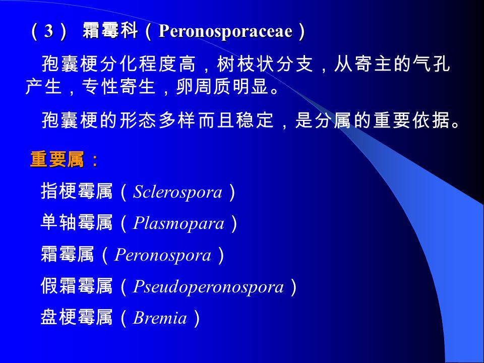 (3) 霜霉科(Peronosporaceae)