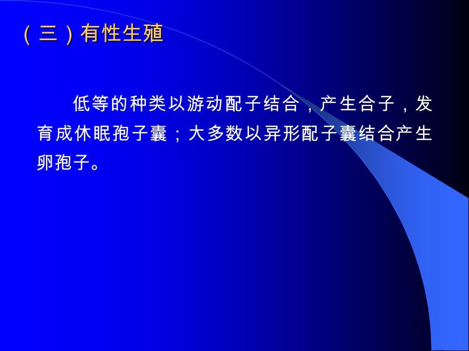 (三)有性生殖 低等的种类以游动配子结合,产生合子,发育成休眠孢子囊;大多数以异形配子囊结合产生卵孢子。