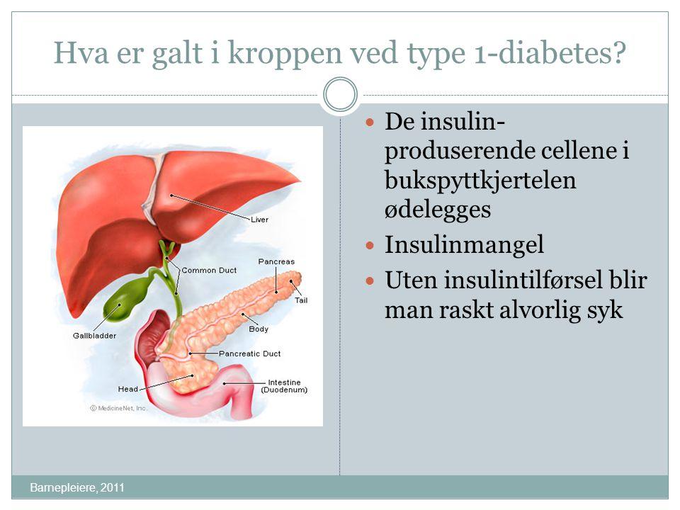 Hva er galt i kroppen ved type 1-diabetes