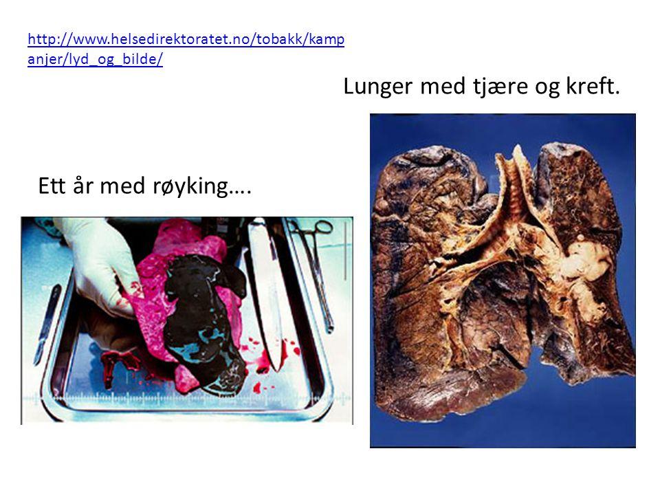 Lunger med tjære og kreft.