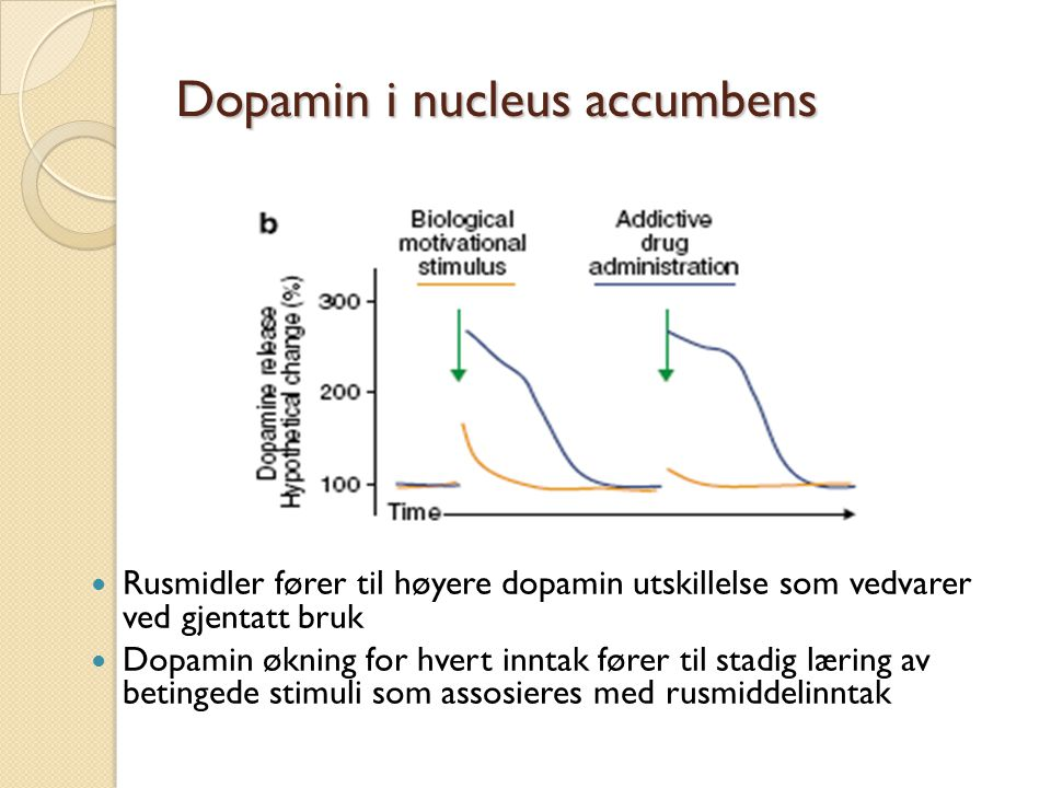 Dopamin i nucleus accumbens