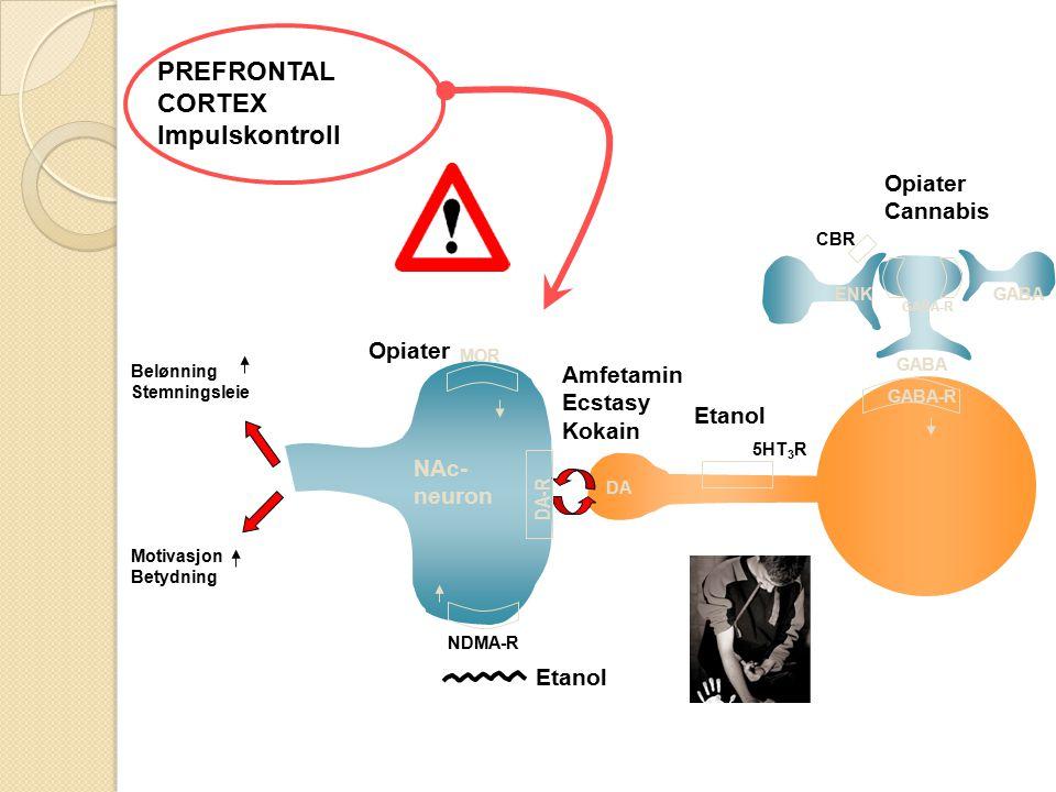 PREFRONTAL CORTEX Impulskontroll