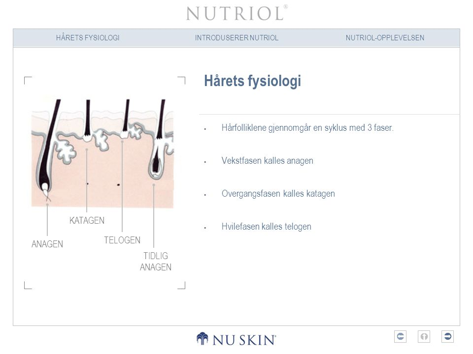 Hårets fysiologi Hårfolliklene gjennomgår en syklus med 3 faser.
