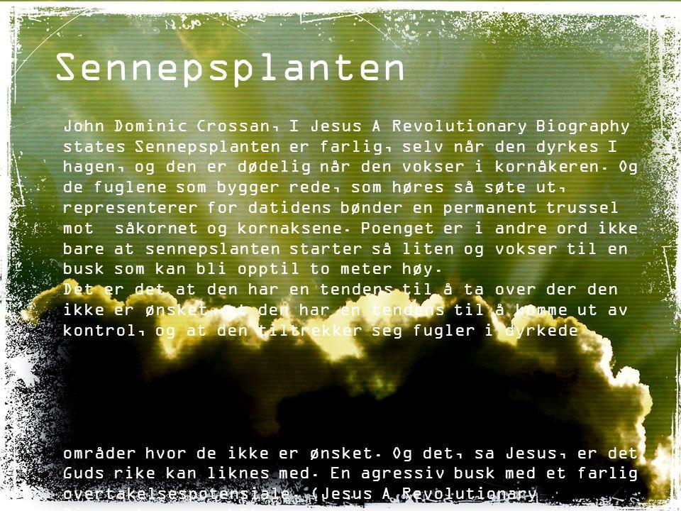 Sennepsplanten