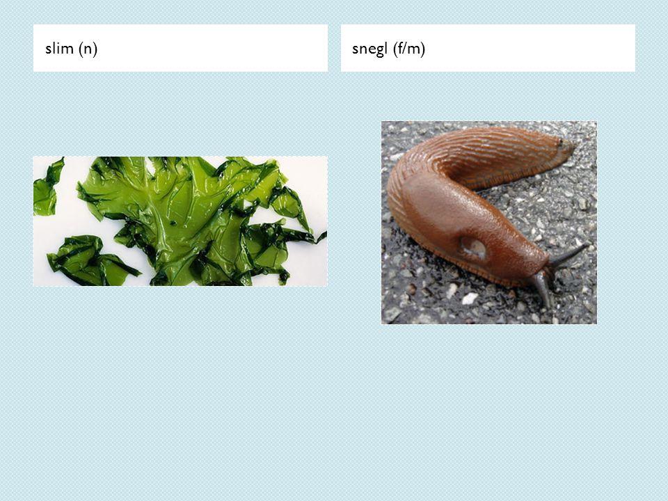 slim (n) snegl (f/m)